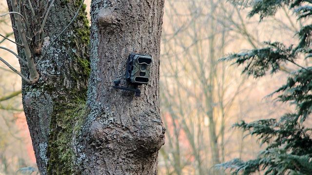 Was macht eine gute Wildkamera aus?