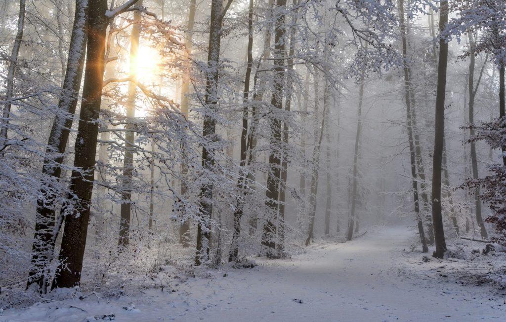 Jagd Winterjacke