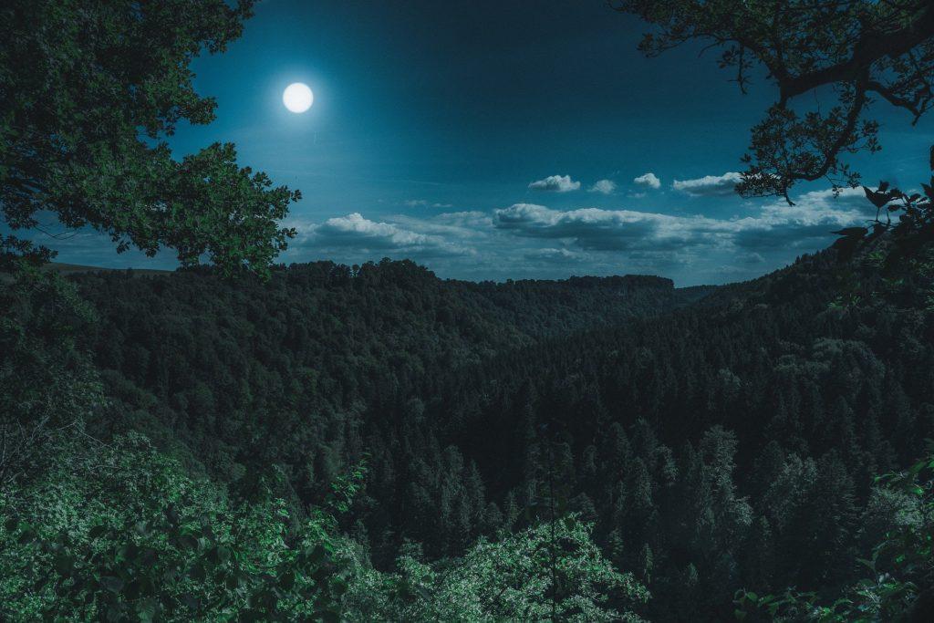 Nachtsichtgerät Jagd